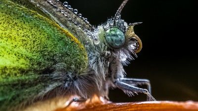 The New Laowa 65mm Macro Lens Gets You Up Close