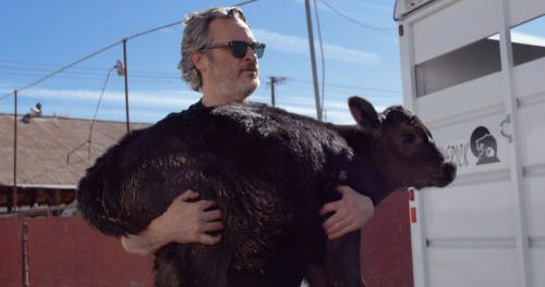 Joaquin Phoenix Rescued a Cow and Her Calf the Day After His