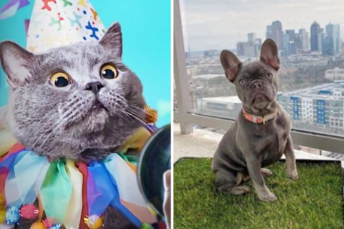 'Pet Stars' Fans Will Love These Pet Products for Influencers
