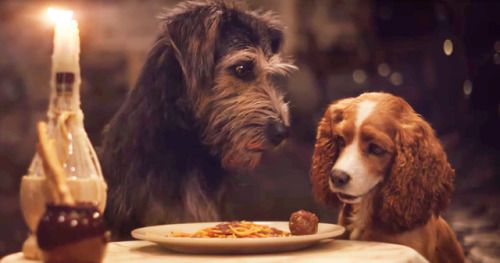 Disney+'s Live-Action Lady and the Tramp Trailer 2