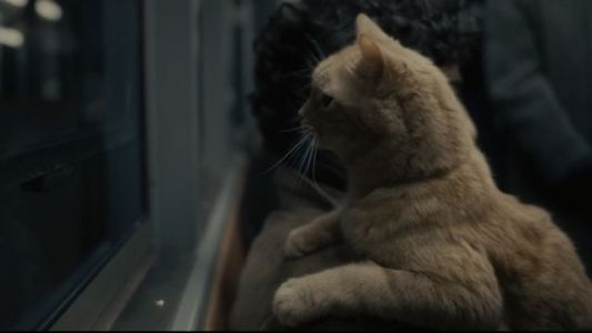 The Five Best Cats In Film