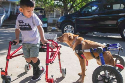 Stream It Or Skip It: 'That Animal Rescue Show' On CBS All Access, A Richard Linklater-Produced Docuseries